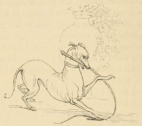Illustration of Greyhound with whip